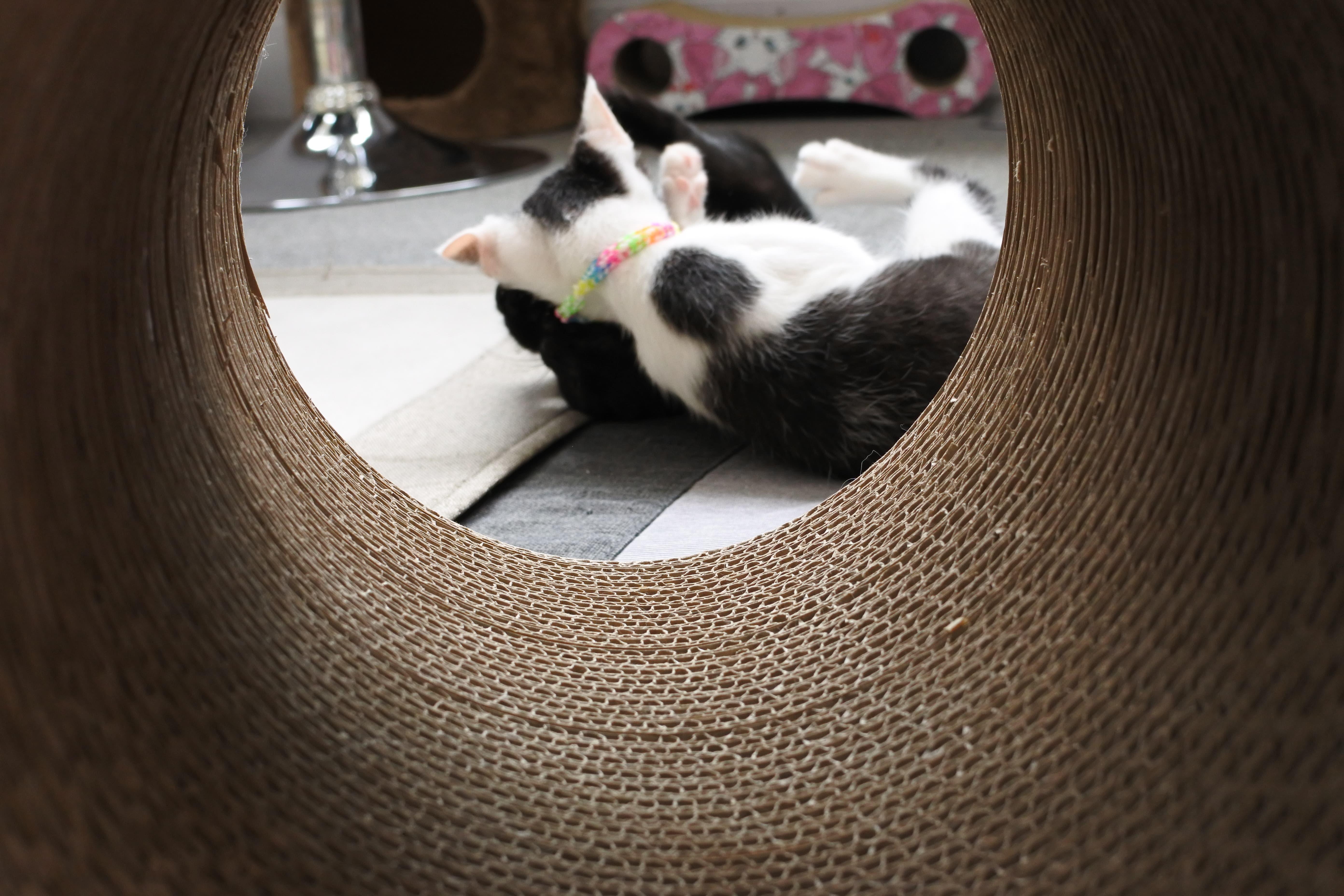 保護猫カフェ ひとやすみ