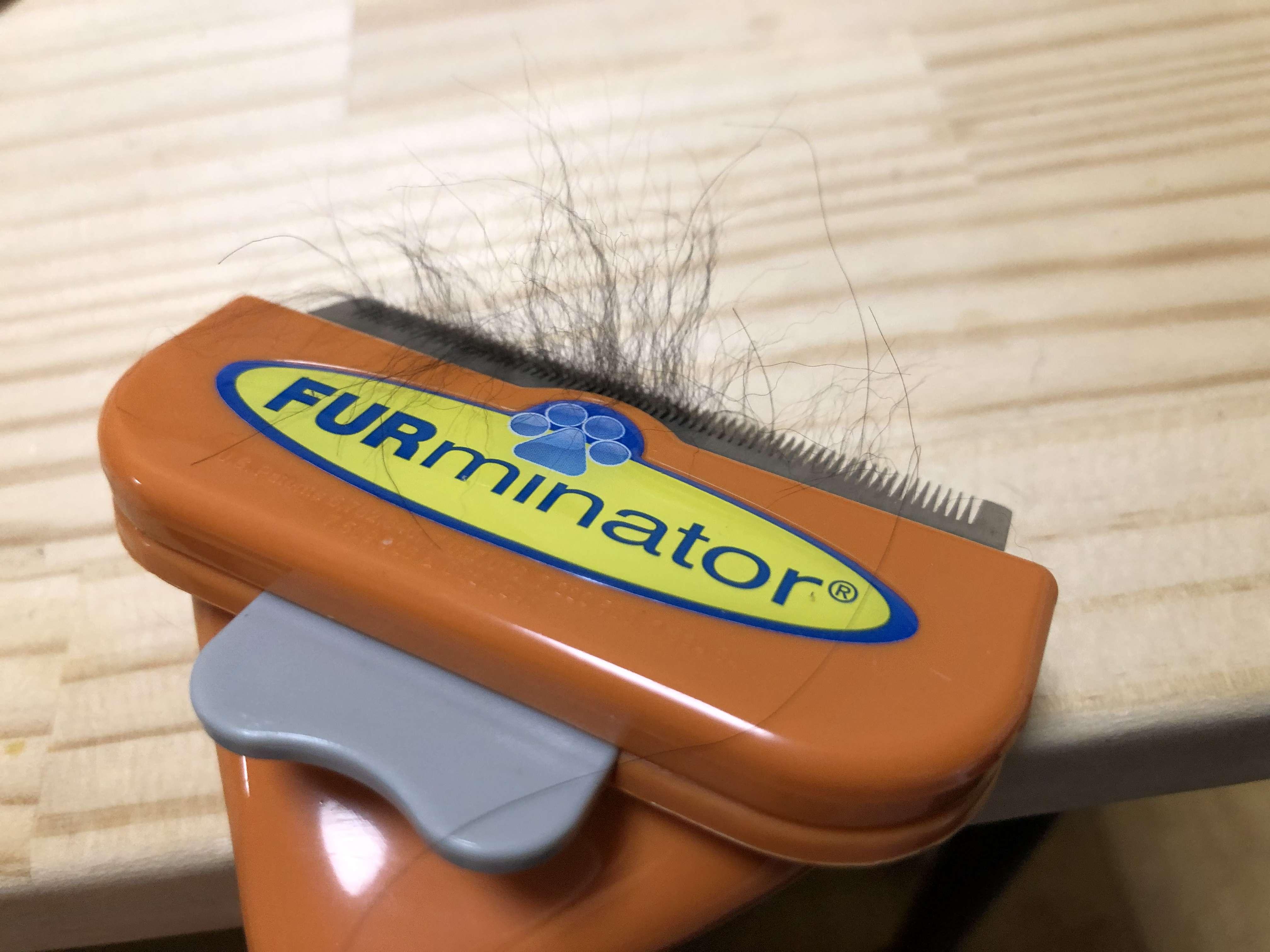 ファーミネーター 本物 使用 毛 取れる
