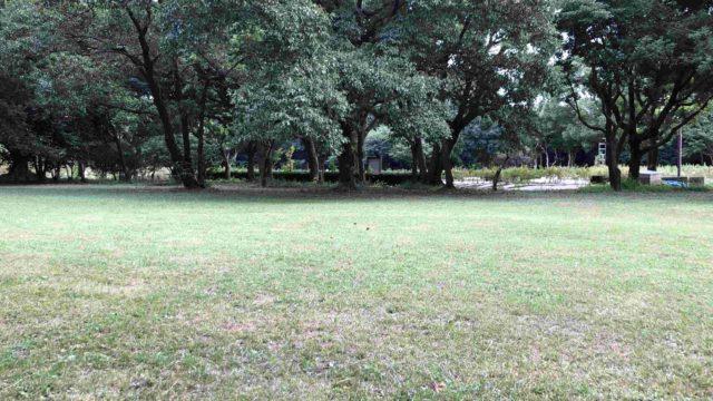 森林 庄内緑地公園